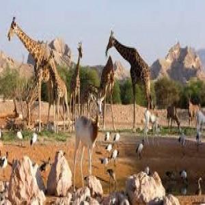 الدليل العربي-مواقع علمية-بيئية-حديقه حيوان العين