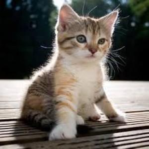 الدليل العربي-مواقع مجتمعية-أطفال-kitten rescue