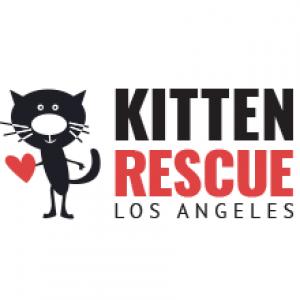 الدليل العربي-kitten rescue